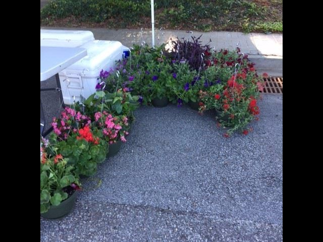 Bower Farms had hanging baskets for sale
