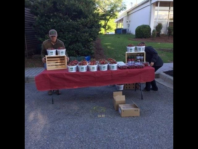 Lever Farms selling strawberries